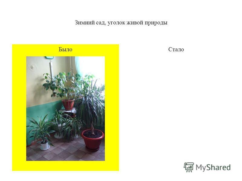 Зимний сад, уголок живой природы Стало Было