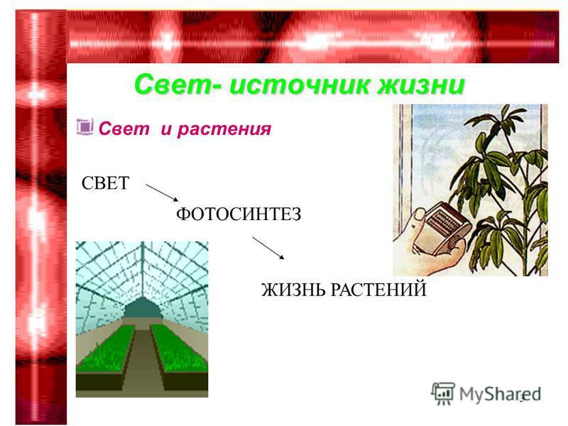 Гимназия 75 Сабирова Р.Р.3 Свет и растения СВЕТ ФОТОСИНТЕЗ ЖИЗНЬ РАСТЕНИЙ Свет- источник жизни