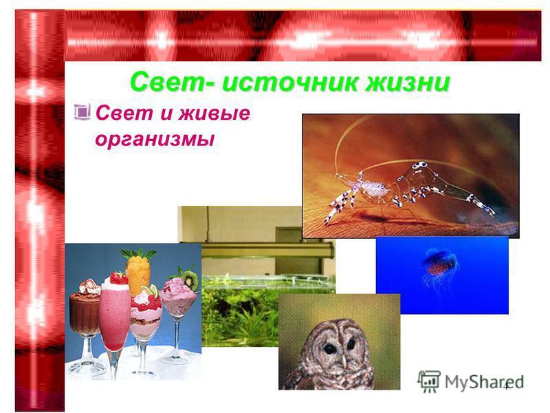 Гимназия 75 Сабирова Р.Р.4 Свет- источник жизни Свет и живые организмы