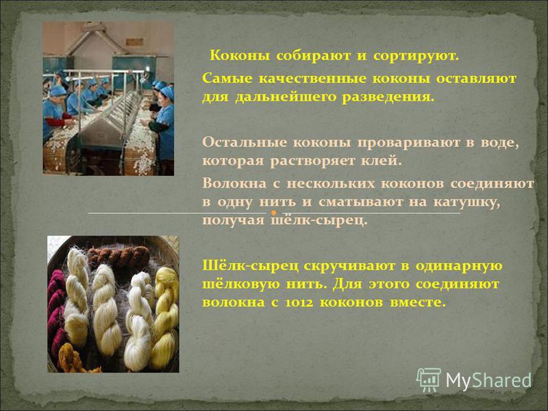 Коконы собирают и сортируют. Самые качественные коконы оставляют для дальнейшего разведения. Остальные коконы проваривают в воде, которая растворяет клей. Волокна с нескольких коконов соединяют в одну нить и сматывают на катушку, получая шёлк-сырец.