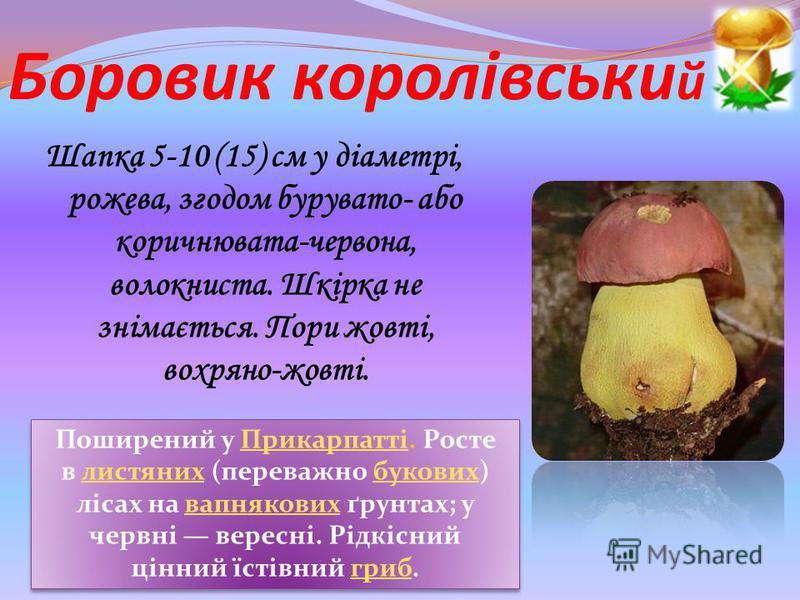 Боровик королівськи й Шапка 5-10 (15) см у діаметрі, рожева, згодом бурувато- або коричнювата-червона, волокниста. Шкірка не знімається. Пори жовті, вохряно-жовті. Поширений у Прикарпатті. Росте в листяних (переважно букових) лісах на вапнякових ґрун