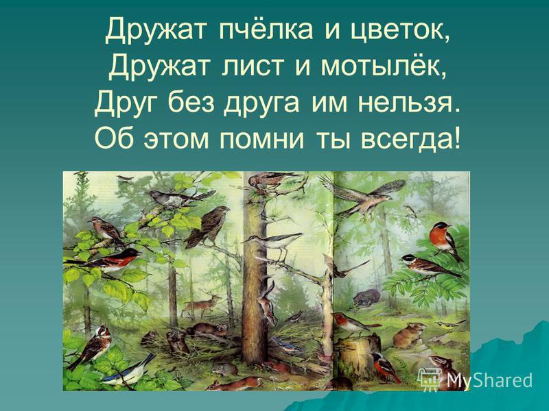 Дружат пчёлка и цветок, Дружат лист и мотылёк, Друг без друга им нельзя. Об этом помни ты всегда!