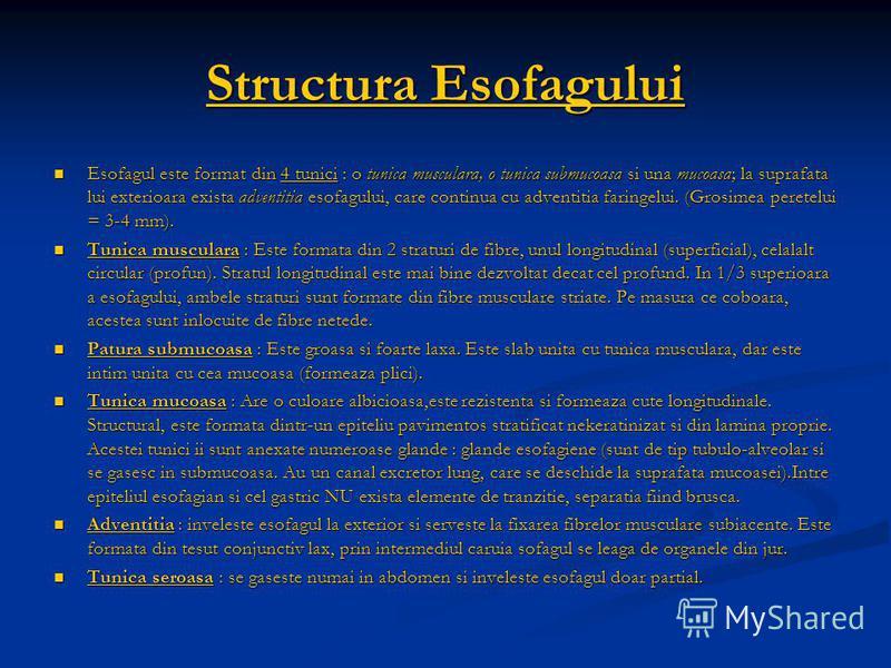 Structura Esofagului Esofagul este format din 4 tunici : o tunica musculara, o tunica submucoasa si una mucoasa; la suprafata lui exterioara exista adventitia esofagului, care continua cu adventitia faringelui. (Grosimea peretelui = 3-4 mm). Esofagul