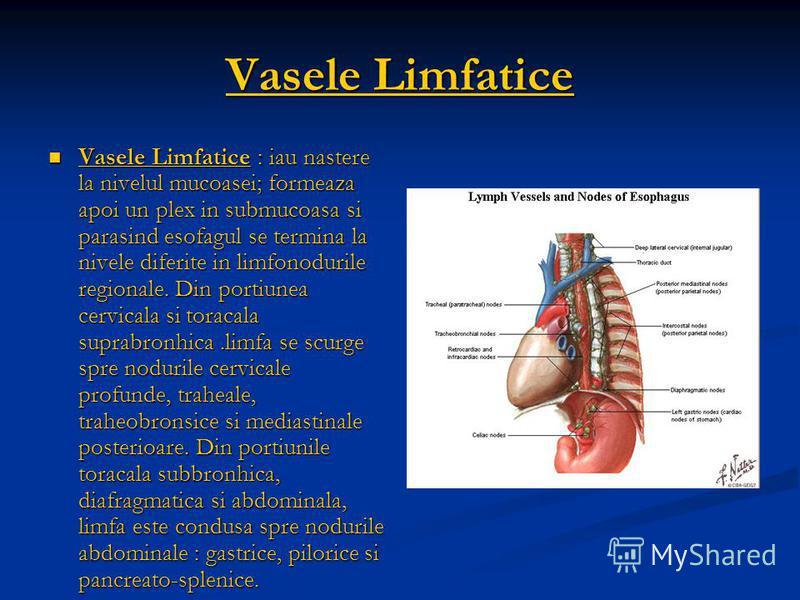 Vasele Limfatice Vasele Limfatice : iau nastere la nivelul mucoasei; formeaza apoi un plex in submucoasa si parasind esofagul se termina la nivele diferite in limfonodurile regionale. Din portiunea cervicala si toracala suprabronhica.limfa se scurge