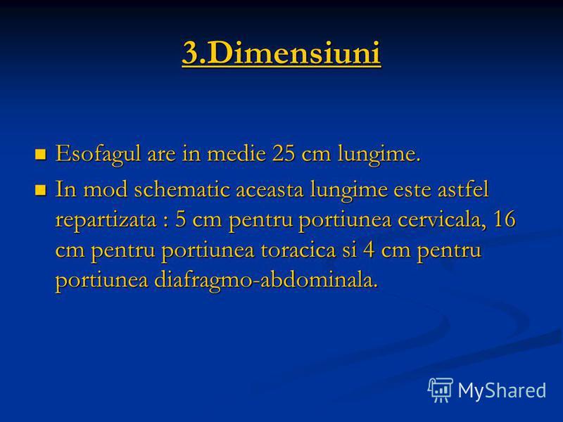 3.Dimensiuni Esofagul are in medie 25 cm lungime. Esofagul are in medie 25 cm lungime. In mod schematic aceasta lungime este astfel repartizata : 5 cm pentru portiunea cervicala, 16 cm pentru portiunea toracica si 4 cm pentru portiunea diafragmo-abdo