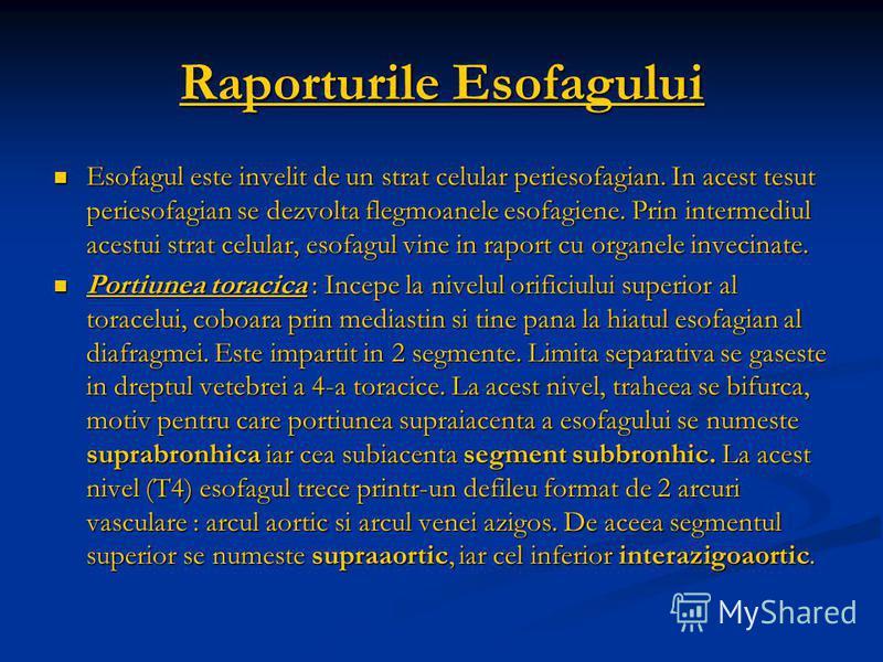 Raporturile Esofagului Esofagul este invelit de un strat celular periesofagian. In acest tesut periesofagian se dezvolta flegmoanele esofagiene. Prin intermediul acestui strat celular, esofagul vine in raport cu organele invecinate. Esofagul este inv