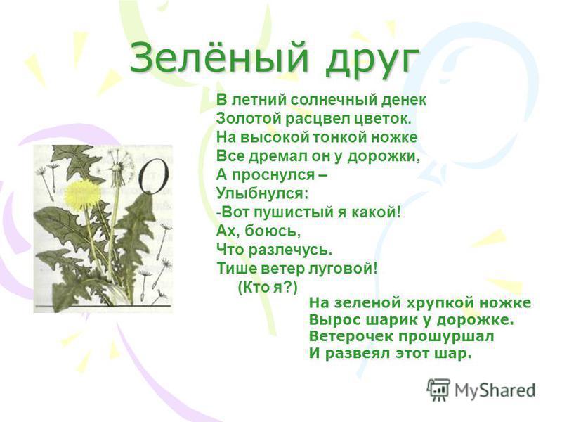 Зелёный друг В летний солнечный денек Золотой расцвел цветок. На высокой тонкой ножке Все дремал он у дорожки, А проснулся – Улыбнулся: -Вот пушистый я какой! Ах, боюсь, Что разлечусь. Тише ветер луговой! (Кто я?) На зеленой хрупкой ножке Вырос шарик