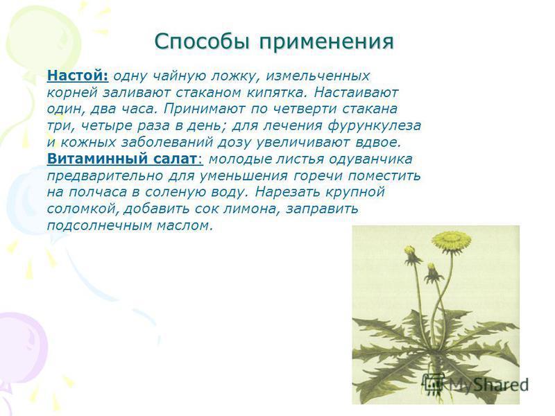 Способы применения Настой: одну чайную ложку, измельченных корней заливают стаканом кипятка. Настаивают один, два часа. Принимают по четверти стакана три, четыре раза в день; для лечения фурункулеза и кожных заболеваний дозу увеличивают вдвое. Витами