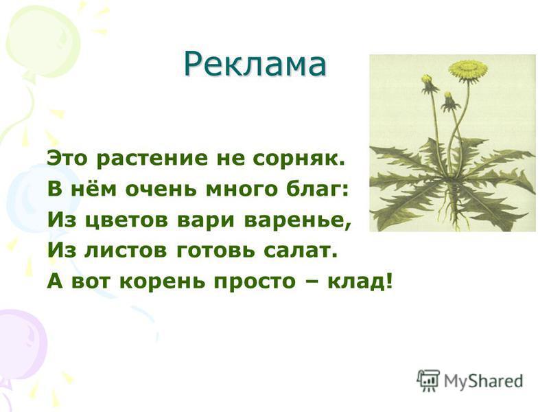 Реклама Это растение не сорняк. В нём очень много благ: Из цветов вари варенье, Из листов готовь салат. А вот корень просто – клад!