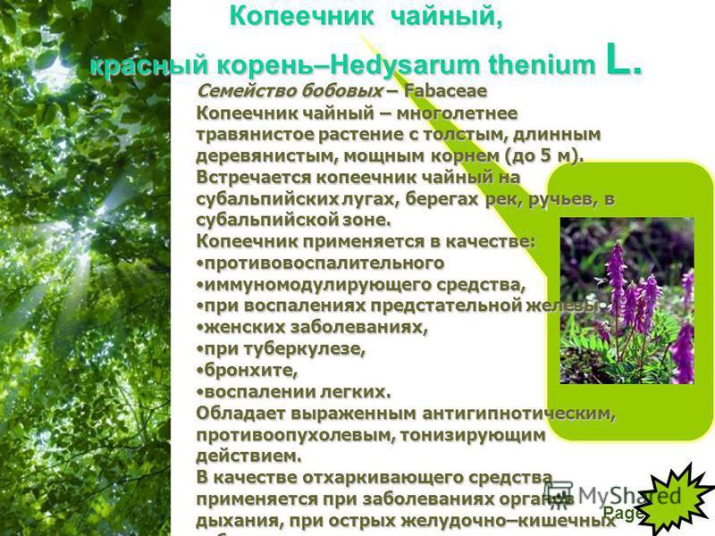 Free Powerpoint Templates Page 18 Копеечник чайный, красный корень–Hedysarum thenium L. Семейство бобовых – Fabaceae Копеечник чайный – многолетнее травянистое растение с толстым, длинным деревянистым, мощным корнем (до 5 м). Встречается копеечник ча