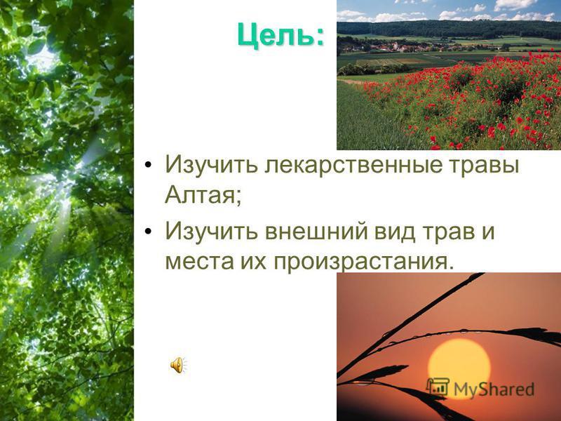 Free Powerpoint Templates Page 2 Цель: Изучить лекарственные травы Алтая; Изучить внешний вид трав и места их произрастания.