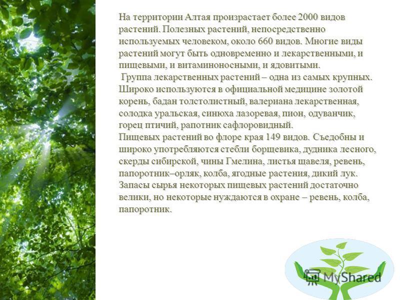 Free Powerpoint Templates Page 3 На территории Алтая произрастает более 2000 видов растений. Полезных растений, непосредственно используемых человеком, около 660 видов. Многие виды растений могут быть одновременно и лекарственными, и пищевыми, и вита