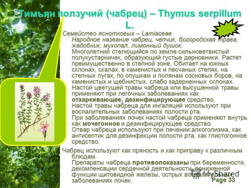 Free Powerpoint Templates Page 33 Тимьян ползучий (чабрец) – Thymus serpillum L. Семейство яснотковых – Lamiaceae Народное название чабрец, чепчик, богородская трава, жадобник, мухопал, лимонный душок. Многолетний стелющийся по земле сильноветвистый
