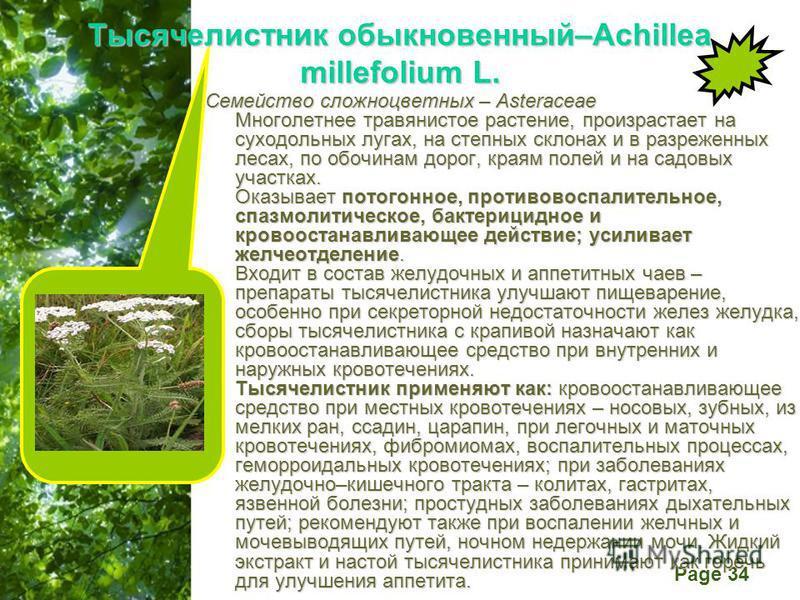 Free Powerpoint Templates Page 34 Тысячелистник обыкновенный–Achillea millefolium L. Семейство сложноцветных – Asteraceae Многолетнее травянистое растение, произрастает на суходольных лугах, на степных склонах и в разреженных лесах, по обочинам дорог