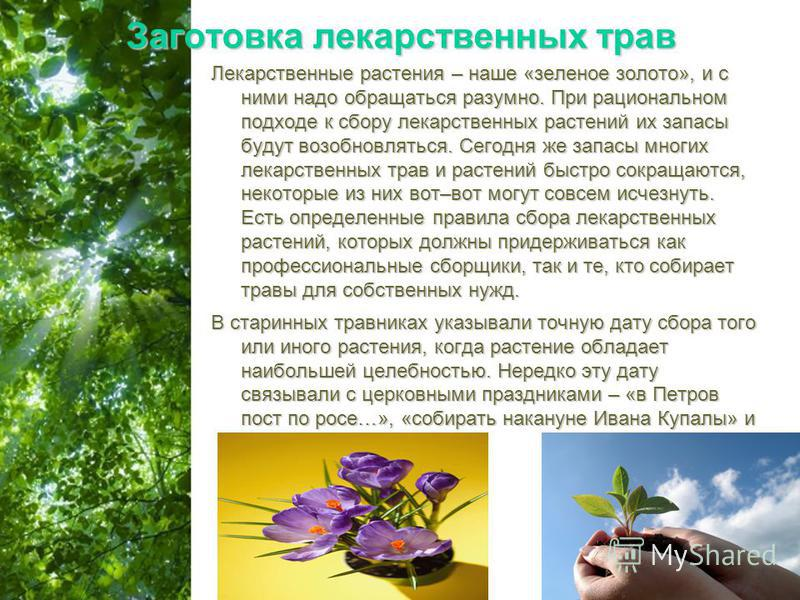 Free Powerpoint Templates Page 6 Заготовка лекарственных трав Лекарственные растения – наше «зеленое золото», и с ними надо обращаться разумно. При рациональном подходе к сбору лекарственных растений их запасы будут возобновляться. Сегодня же запасы