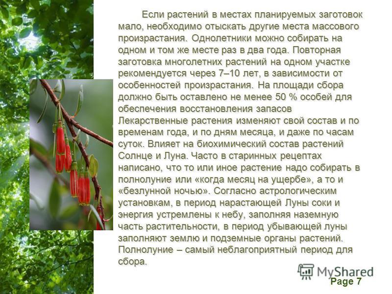 Free Powerpoint Templates Page 7 Если растений в местах планируемых заготовок мало, необходимо отыскать другие места массового произрастания. Однолетники можно собирать на одном и том же месте раз в два года. Повторная заготовка многолетних растений