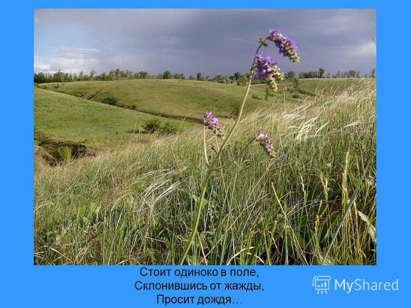 Стоит одиноко в поле, Склонившись от жажды, Просит дождя…