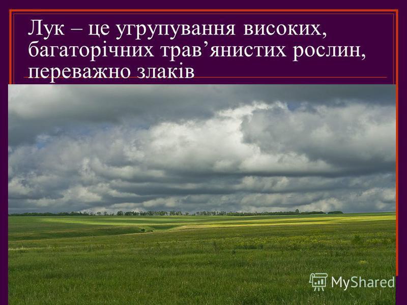 Лук – це угрупування високих, багаторічних травянистих рослин, переважно злаків