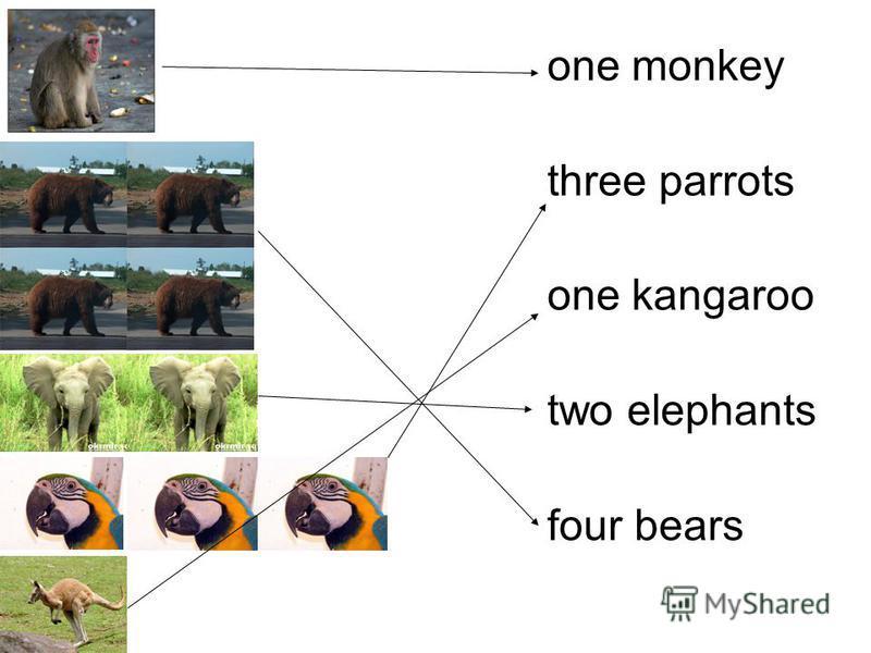 one monkey three parrots one kangaroo two elephants four bears