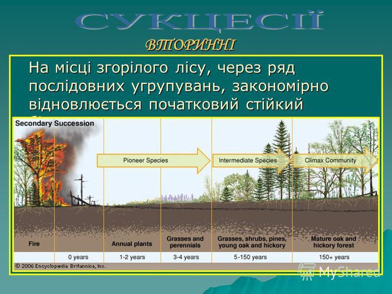 ВТОРИННІ Відновлення природної рослинності після певних порушень (наприклад, відновлення лісів після пожеж)