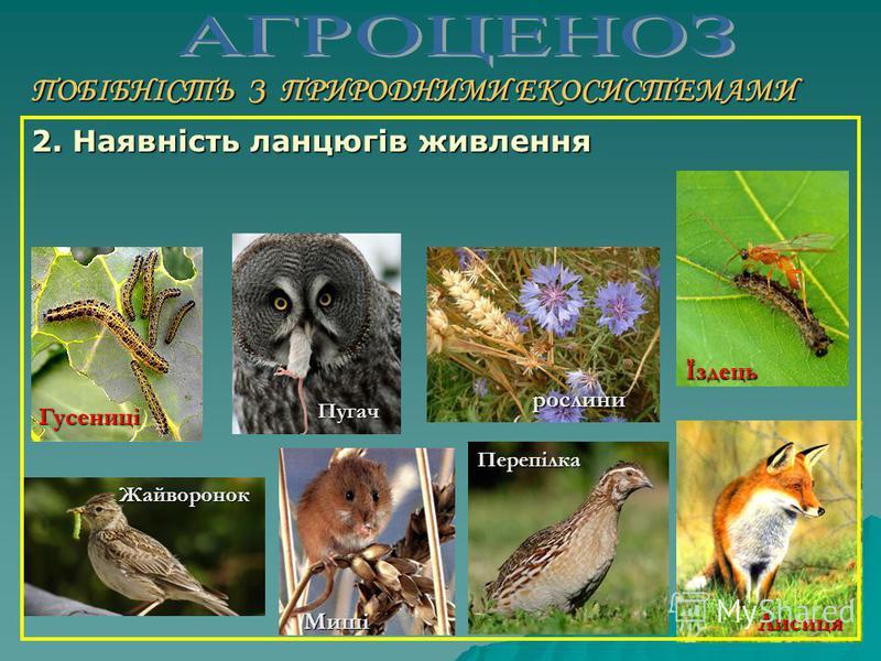 ПОБІБНІСТЬ З ПРИРОДНИМИ ЕКОСИСТЕМАМИ 1. Наявність всіх трьох функціональних екологічних груп організмів: продуцентів, консументів і редуцентів