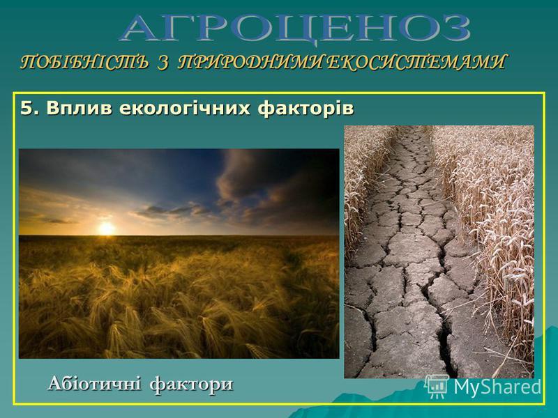 ПОБІБНІСТЬ З ПРИРОДНИМИ ЕКОСИСТЕМАМИ 4. Наявність ярусної структури