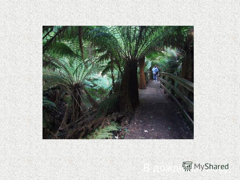 В дождевом лесу
