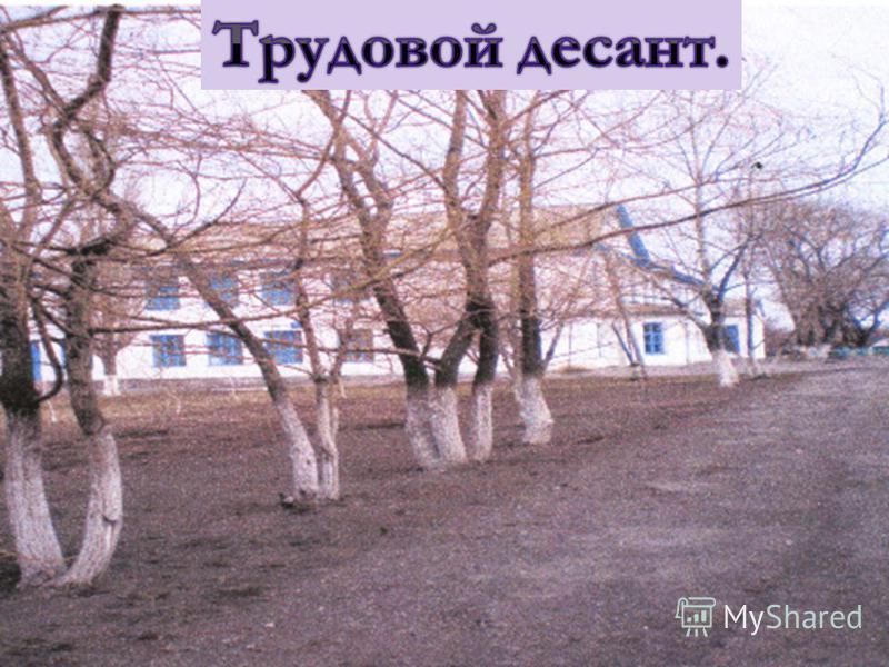 Школьному саду 55 лет, в 1986 году сад был полностью обновлен. Постоянно Школьному саду 55 лет, в 1986 году сад был полностью обновлен. Постоянно проходит обрезка, борьба с вредителями, замена погибших деревьев. проходит обрезка, борьба с вредителями