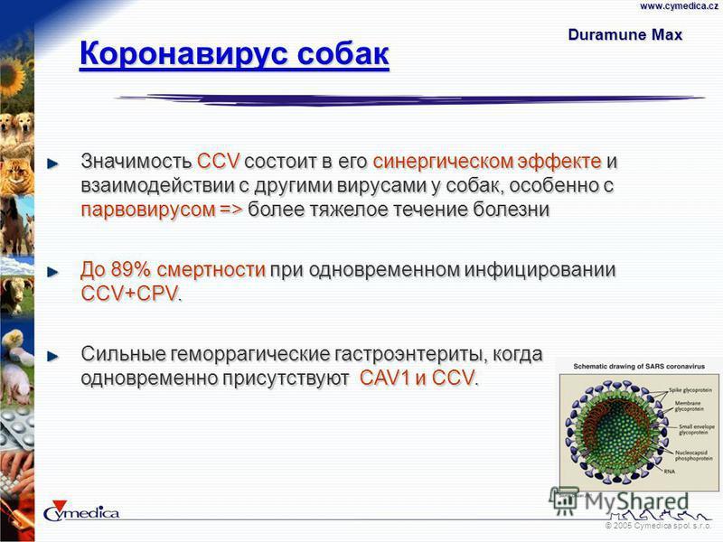© 2005 Cymedica spol. s.r.o.www.cymedica.cz Значимость CCV состоит в его синергическом эффекте и взаимодействии с другими вирусами у собак, особенно с парвовирусом => более тяжелое течение болезни До 89% смертности при одновременном инфицировании CCV