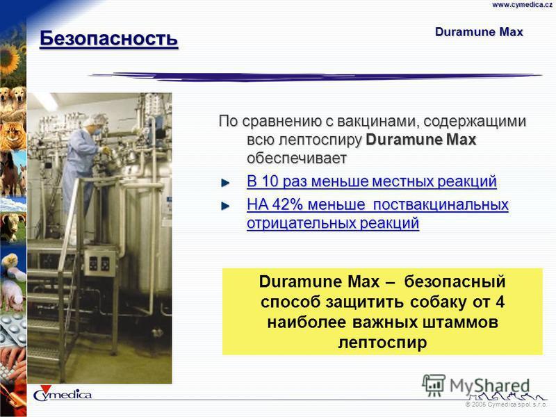 © 2005 Cymedica spol. s.r.o.www.cymedica.cz Duramune Max По сравнению с вакцинами, содержащими всю лептоспиру Duramune Max обеспечивает В 10 раз меньше местных реакций НА 42% меньше поствакцинальных отрицательных реакций Duramune Max – безопасный спо