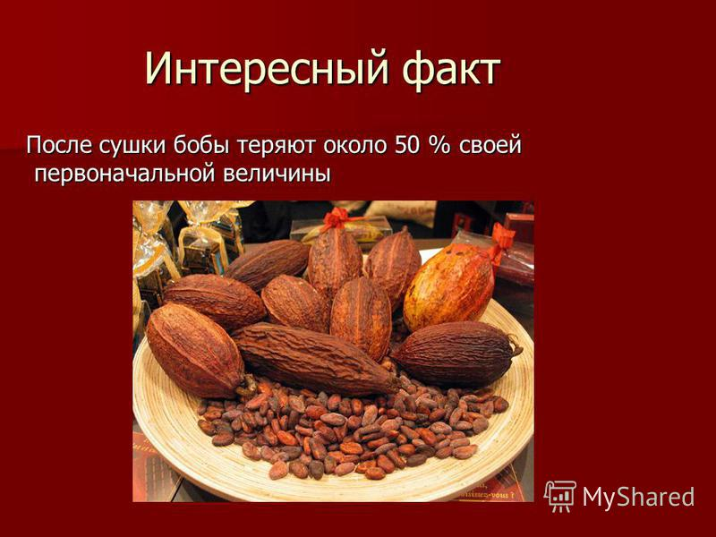Интересный факт После сушки бобы теряют около 50 % своей первоначальной величины После сушки бобы теряют около 50 % своей первоначальной величины