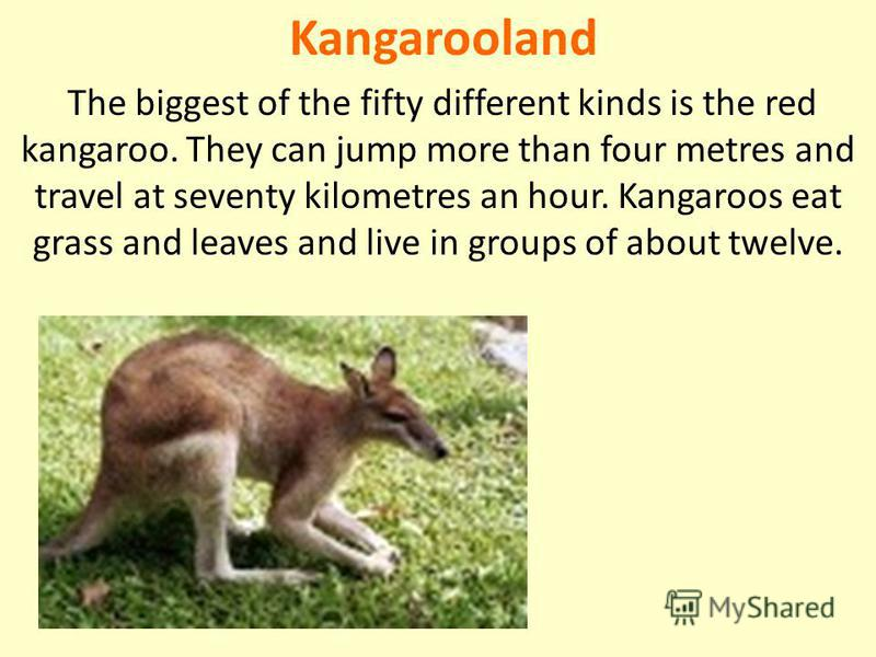 Kangarooland The biggest of the fifty different kinds is the red kangaroo. They can jump more than four metres and travel at seventy kilometres an hour. Kangaroos eat grass and leaves and live in groups of about twelve.