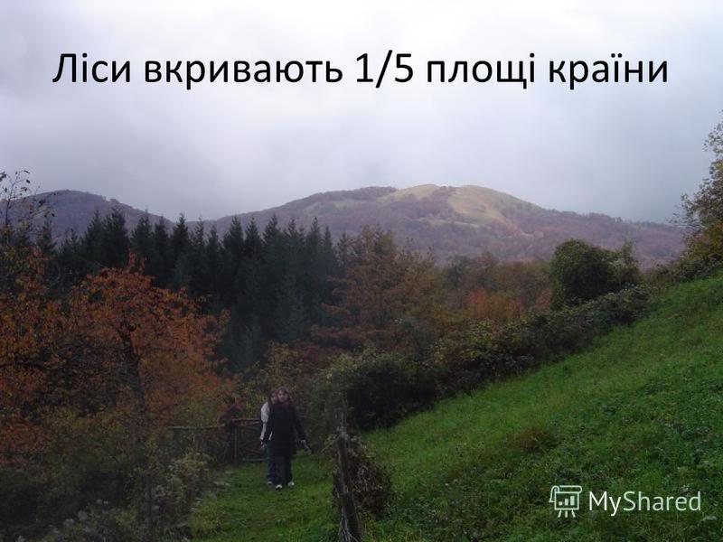 Ліси вкривають 1/5 площі країни