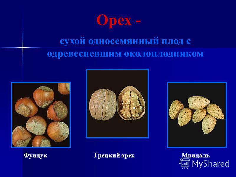 Орех - сухой односемянный плод с одревесневшим околоплодником Фундук Грецкий орех Миндаль
