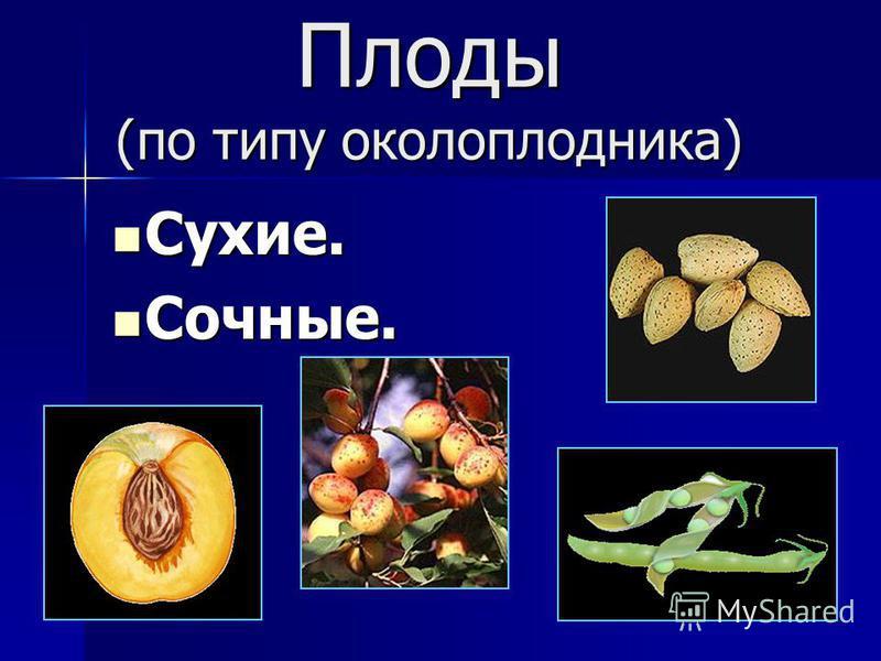 Плоды (по типу околоплодника) Сухие. Сухие. Сочные. Сочные.