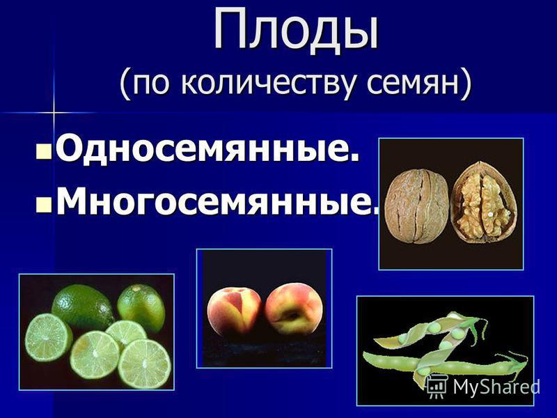 Плоды (по количеству семян) Односемянные. Односемянные. Многосемянные. Многосемянные.