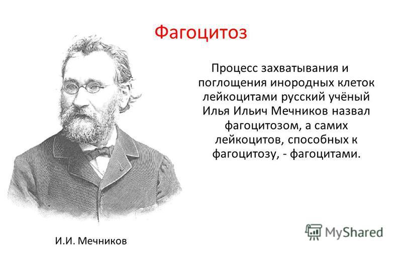 Фагоцитоз Процесс захватывания и поглощения инородных клеток лейкоцитами русский учёный Илья Ильич Мечников назвал фагоцитозом, а самих лейкоцитов, способных к фагоцитозу, - фагоцитами. И.И. Мечников