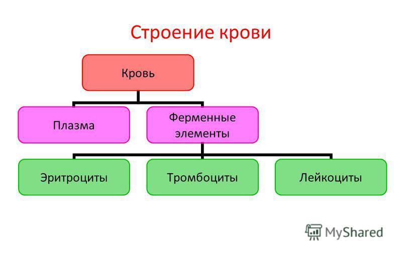 Строение крови Кровь Плазма Ферменные элементы Эритроциты ТромбоцитыЛейкоциты