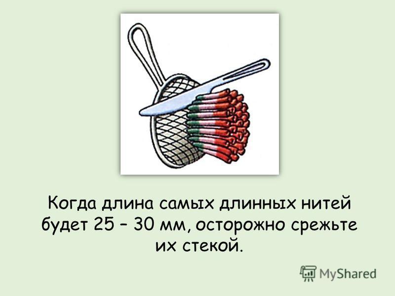 Когда длина самых длинных нитей будет 25 – 30 мм, осторожно срежьте их стекой.