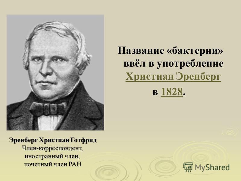 Название «бактерии» ввёл в употребление Христиан Эренберг Христиан Эренберг в 1828.1828 Эренберг Христиан Готфрид Член-корреспондент, иностранный член, почетный член РАН