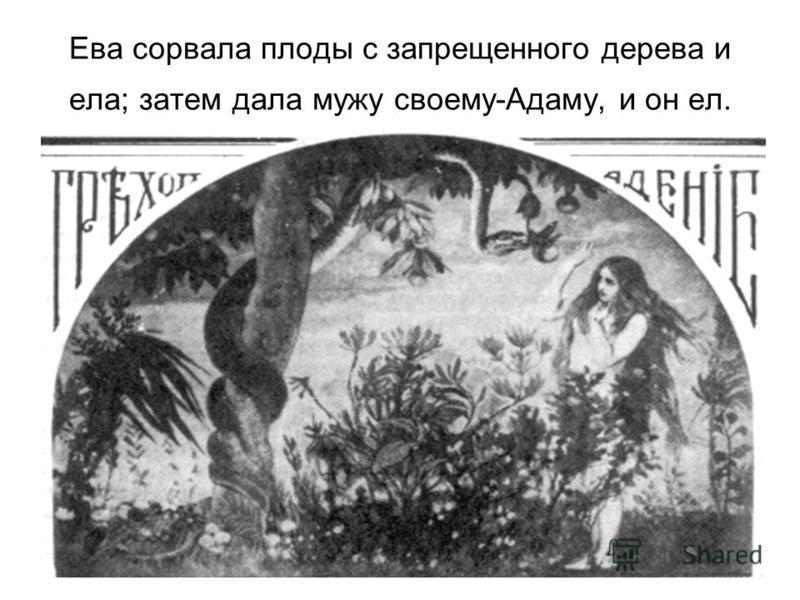 Ева сорвала плоды с запрещенного дерева и ела; затем дала мужу своему-Адаму, и он ел.