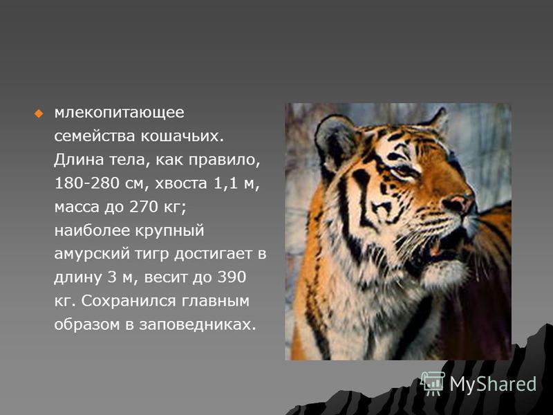 млекопитающее семейства кошачьих. Длина тела, как правило, 180-280 см, хвоста 1,1 м, масса до 270 кг; наиболее крупный амурский тигр достигает в длину 3 м, весит до 390 кг. Сохранился главным образом в заповедниках.