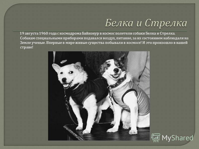 19 августа 1960 года с космодрома Байконур в космос полетели собаки Белка и Стрелка. Собакам специальными приборами подавался воздух, питание, за их состоянием наблюдали на Земле ученые. Впервые в мире живые существа побывали в космосе ! И это произо