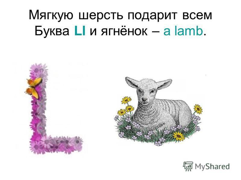 Мягкую шерсть подарит всем Буква Ll и ягнёнок – a lamb.