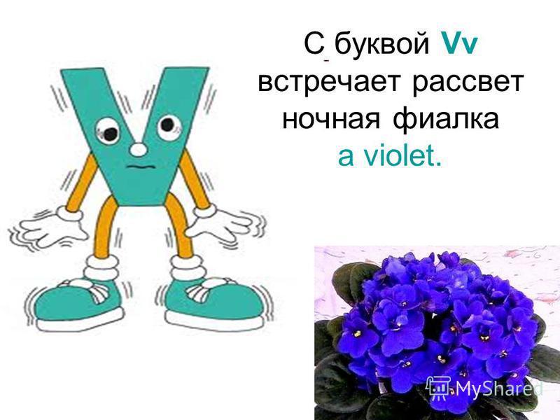 С буквой Vv встречает рассвет ночная фиалка a violet.
