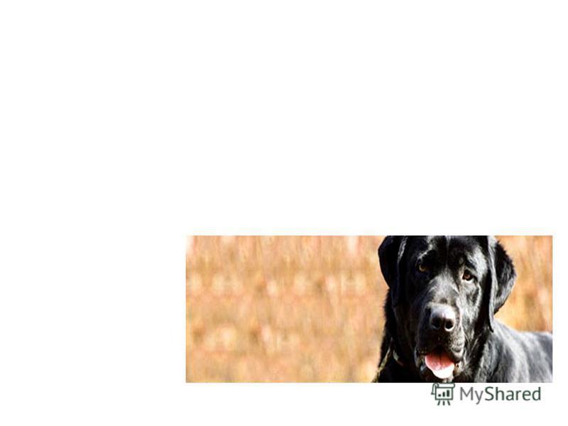 УСЛУГИ: Гигиеническая стрижка всех пород, с индивидуальными пожеланиями владельца. Профессиональная стрижка и подготовка шерсти собаки в выставке. Стрижка кошек (услуга оказывается только нашим гостям). Расчесывание запущенных собак. Подстригание ког