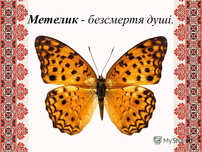 Метелик - безсмертя душі.