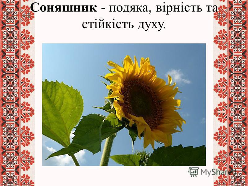 Соняшник - подяка, вірність та стійкість духу.