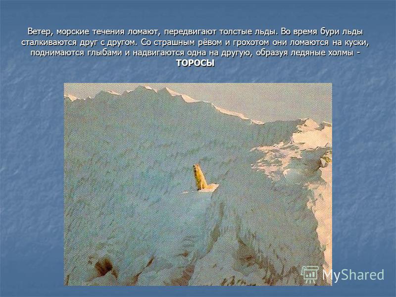 Ветер, морские течения ломают, передвигают толстые льды. Во время бури льды сталкиваются друг с другом. Со страшным рёвом и грохотом они ломаются на куски, поднимаются глыбами и надвигаются одна на другую, образуя ледяные холмы - ТОРОСЫ