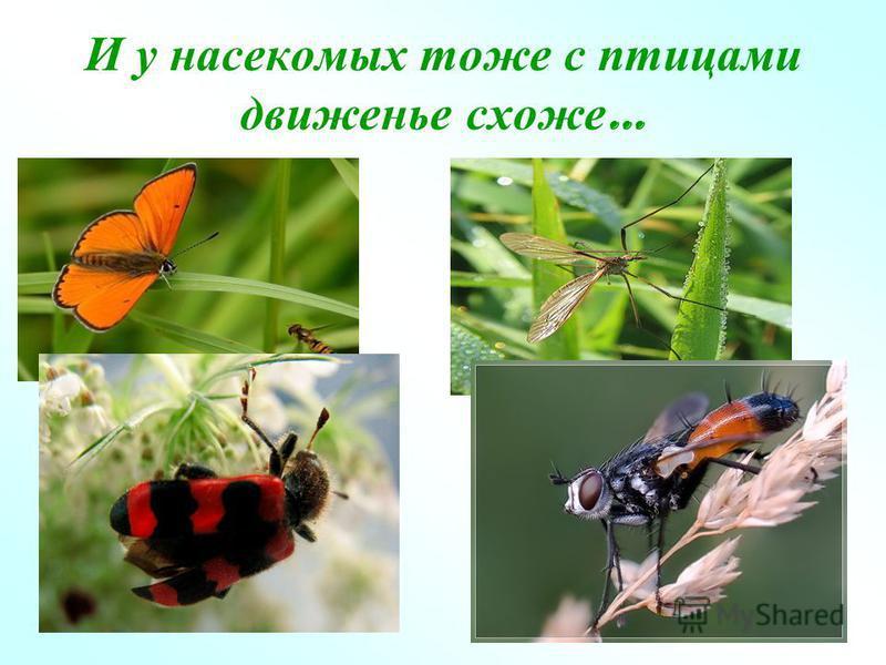 И у насекомых тоже с птицами движенье схоже …